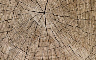 Le bois, un matériau vivant